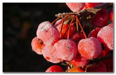 New Berries HD Wallpaper