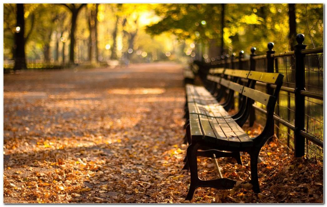 Newyork Park Sunset Wallpaper
