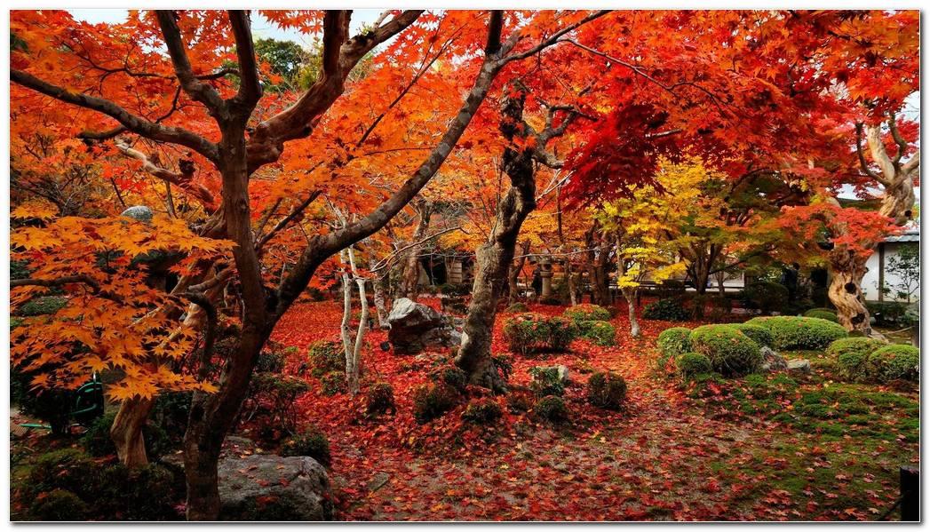 Nice Autumn Season Nature Wallpaper Background