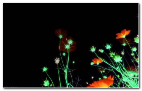 Night View With Flowers HD Wallpaper