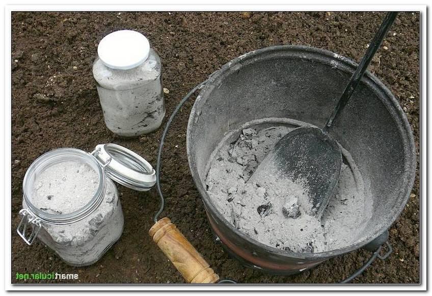 Ofen Asche Im Garten