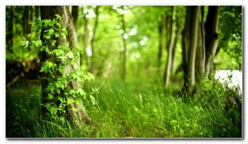 Outstanding Greenery HD Wallpaper