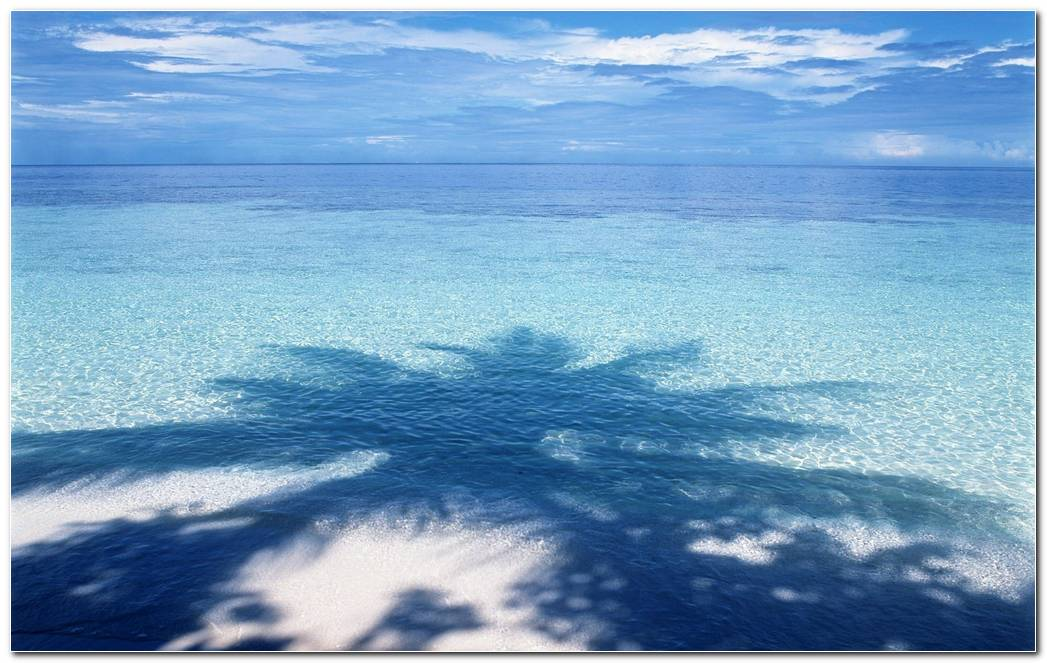 Palm Tree Wallpaper Background Pixel Shadow Tree Sea Beaches