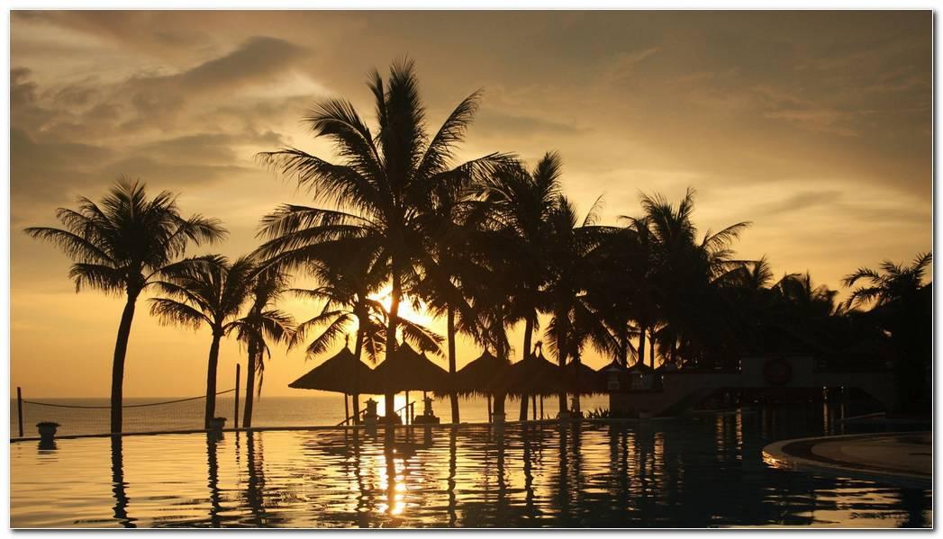 Palm Trees Sea Sky Sunset Wallpaper