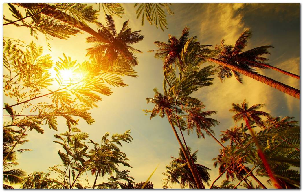 Palms Tropical Nature Wallpaper Background