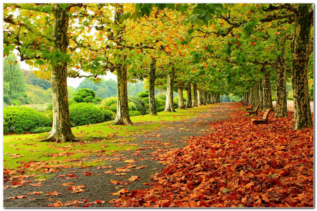 Park Autumn Wallpaper Foliage