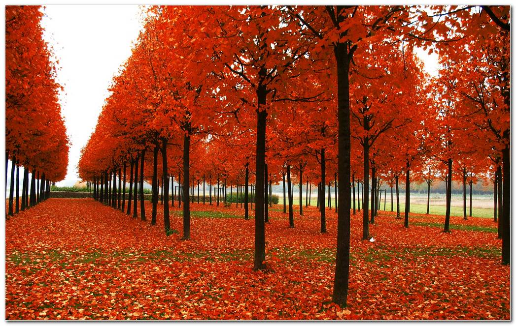 Park Trees Autumn Wallpaper