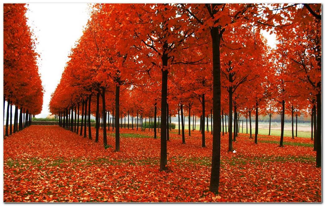 Park Trees Autumn Wallpaper