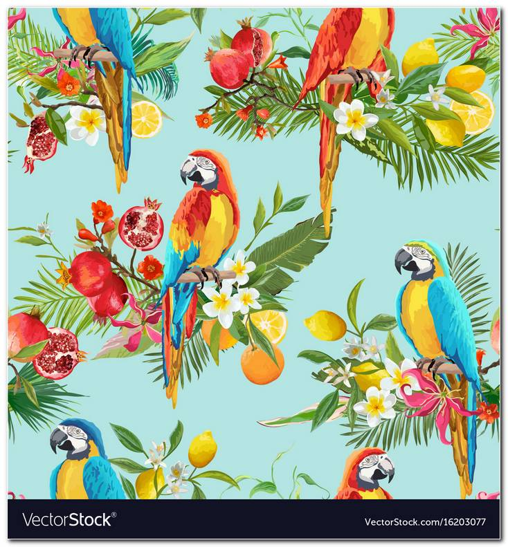 Parrot Background