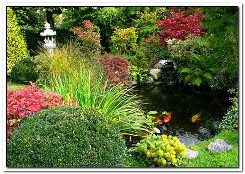 Pflanzen F?R Japanischen Garten Kaufen   Copy