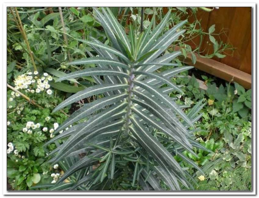 Pflanzen Gegen W?Hlm?Use Im Garten   Copy