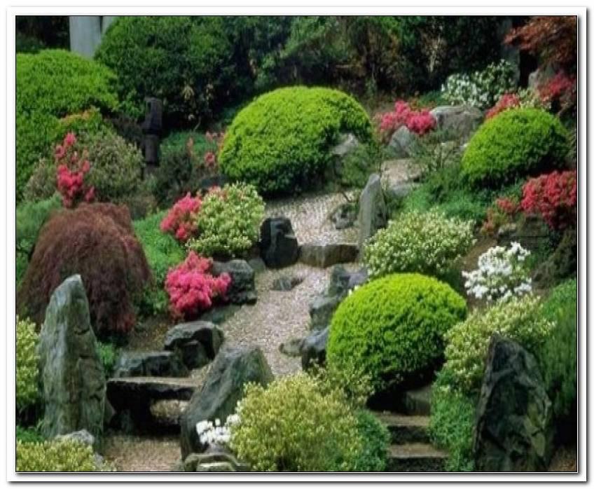 Pflanzen Geh?Ren Japanischen Garten