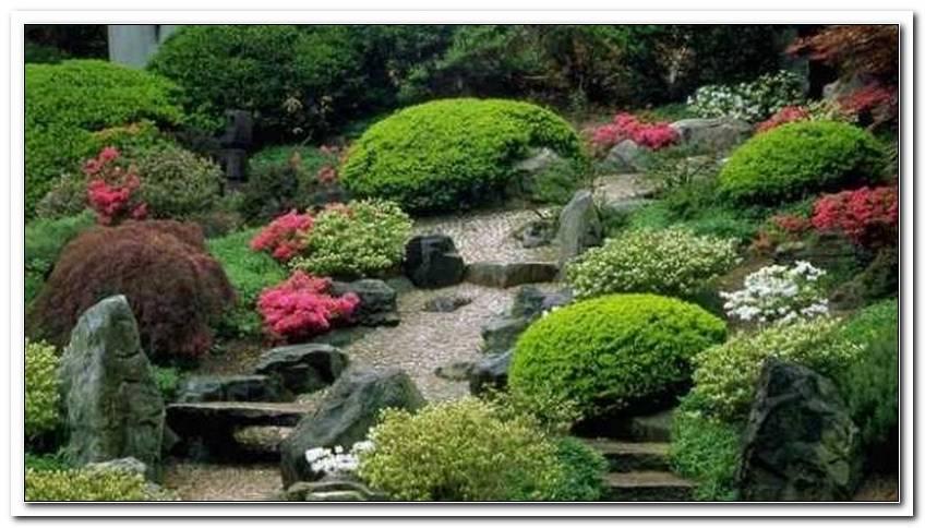 Pflanzen Japanischer Garten   Copy