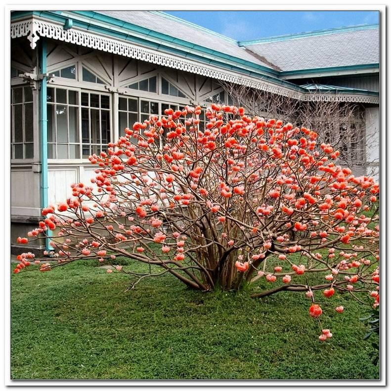 Pflanzen Japanischer Garten Kaufen