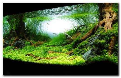 Photography Of Aquarium HD Wallpaper