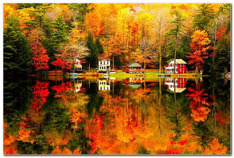 Picture Autumn Season Nature Wallpaper Background