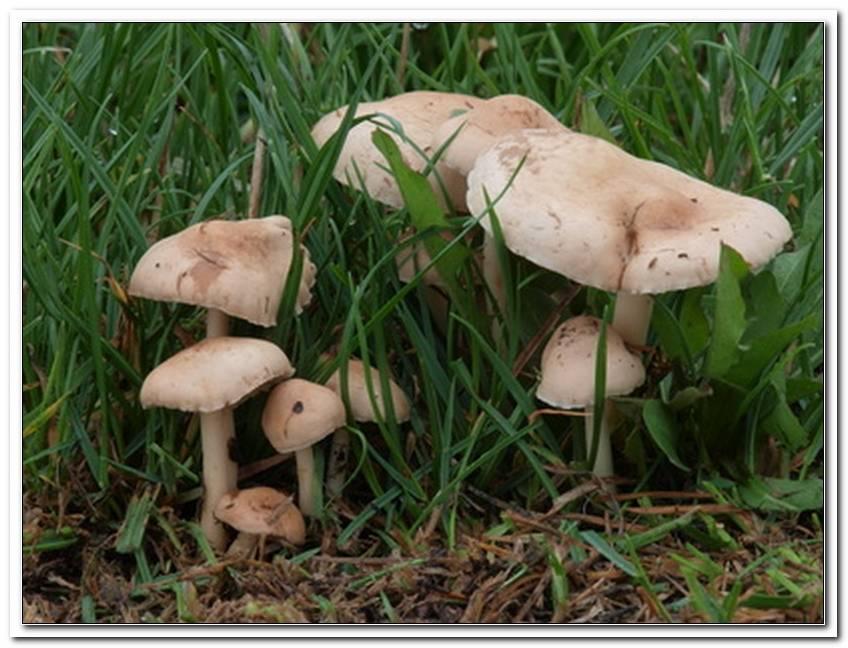 Pilze Im Garten Bestimmen   Copy