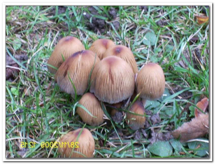 Pilze Im Garten Giftig F?R Hunde
