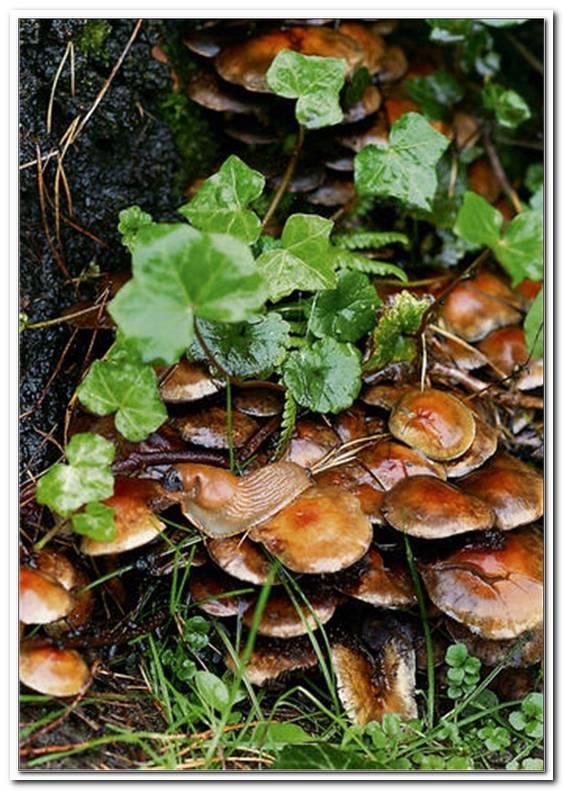 Pilze Im Gartenboden