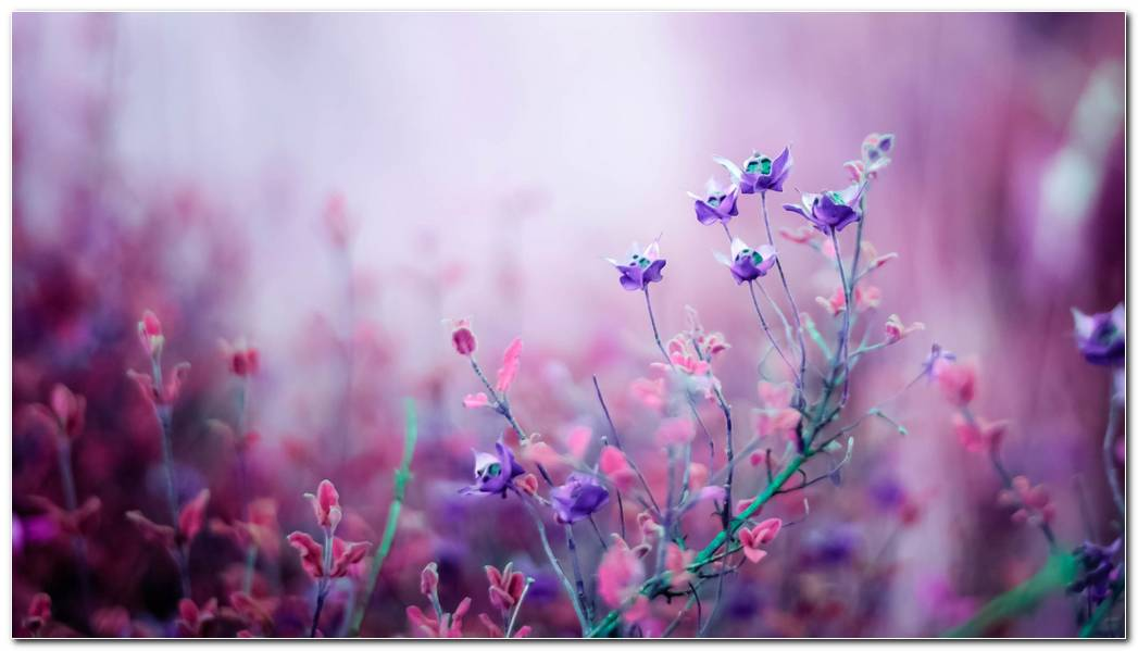 Pink Amazing Wildflower Wallpapers Background