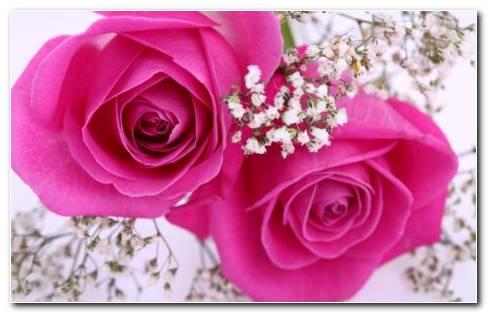 Pink Nature HD Wallpaper