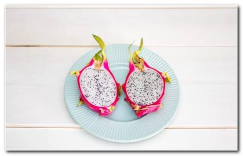 Pitahaya Planta HD Wallpaper