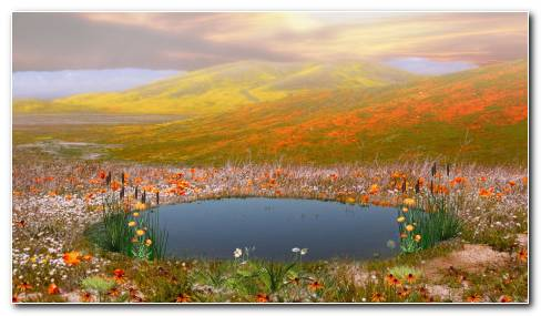 Pond And Flowers HD Wallpaper
