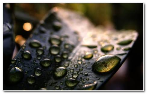 Pretty Scenery Of Drops HD Wallpaper