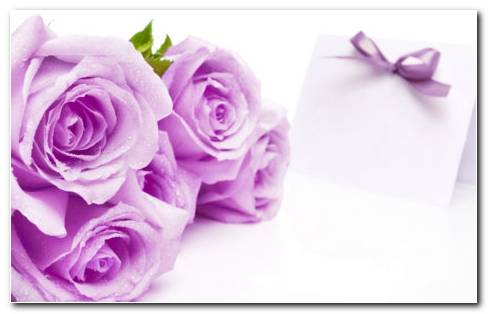 Purple Rose Images HD Wallpaper