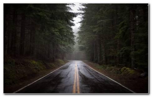 Rainy Forest Road HD Wallpaper