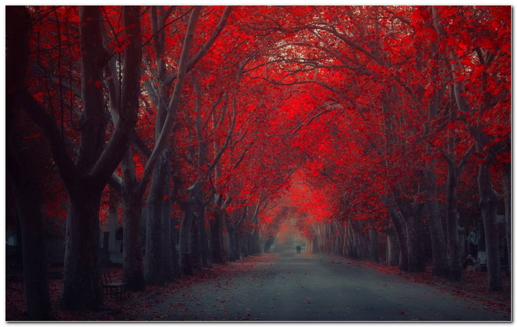 Red Autumn Street Nature Wallpaper Background