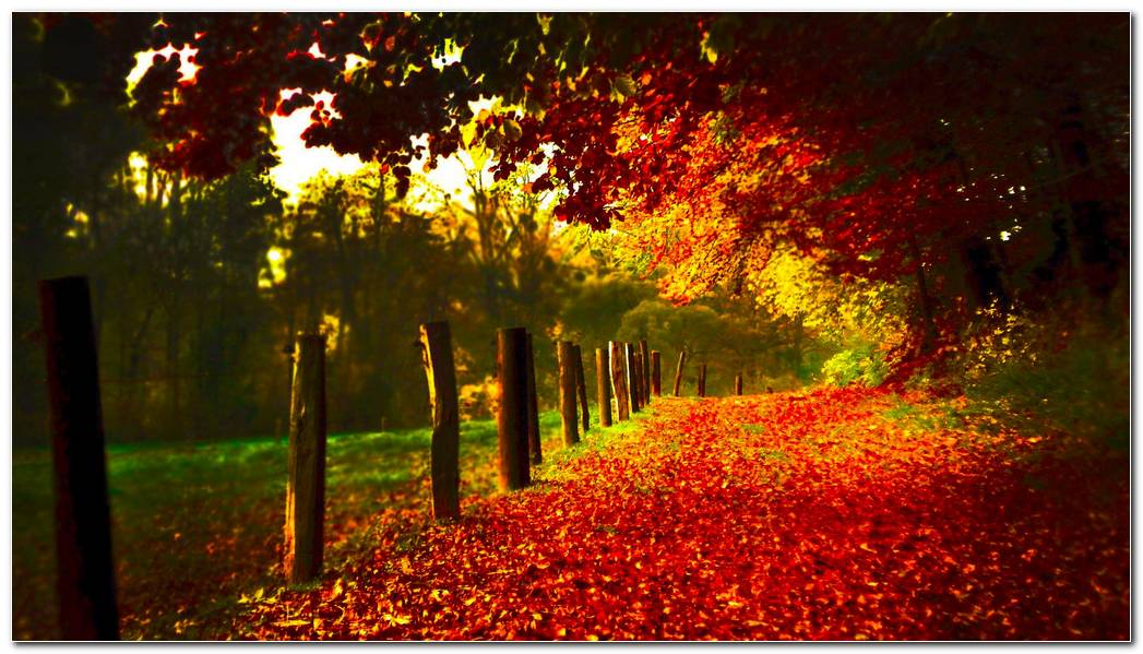 Red Leaves Autumn Season Nature Wallpaper Background