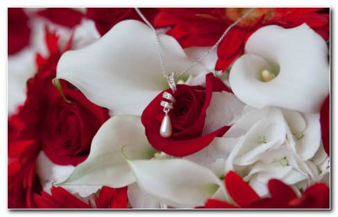 Red Rose On White Calla Petals HD Wallpaper