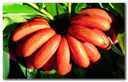 Red banana HD wallpaper