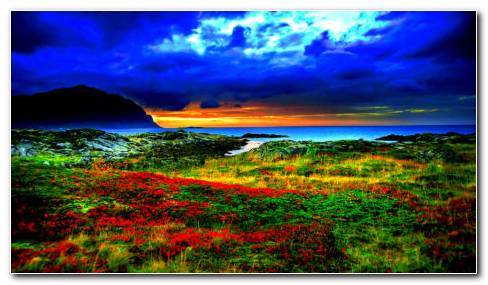 Red Flowers On The Coast HD Wallpaper