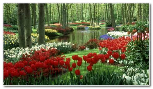 Rich flower garden HD wallpaper