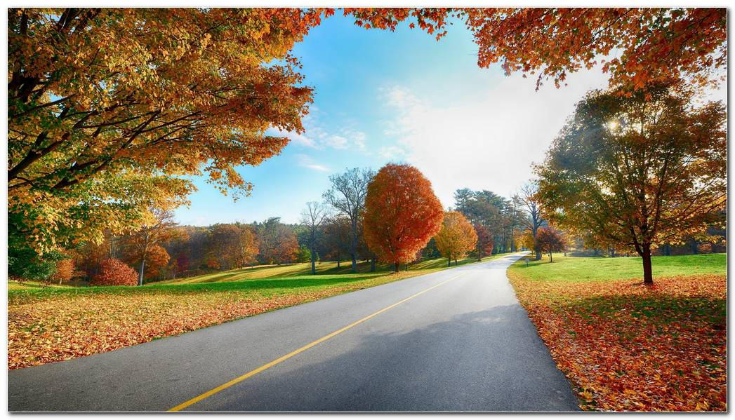 Road Markings Autumn Wallpaper
