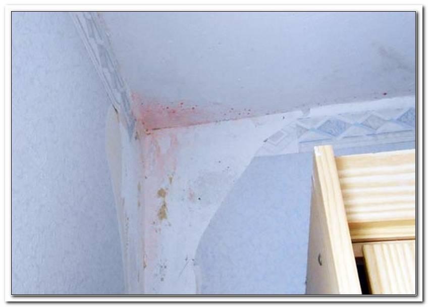 Roter Schimmel An Der Wand Gef?Hrlich