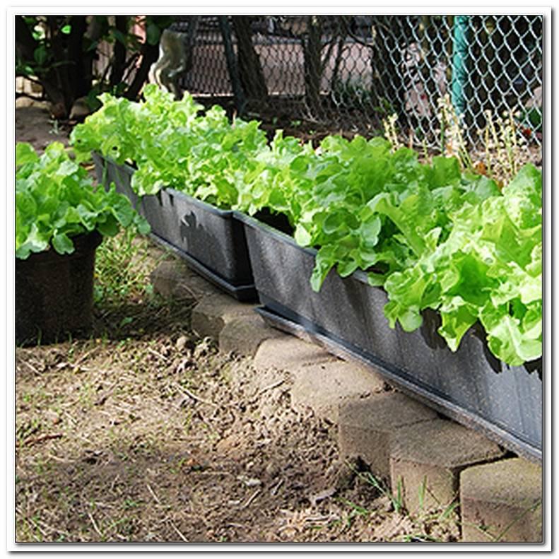Salat Auf Terrasse Anbauen