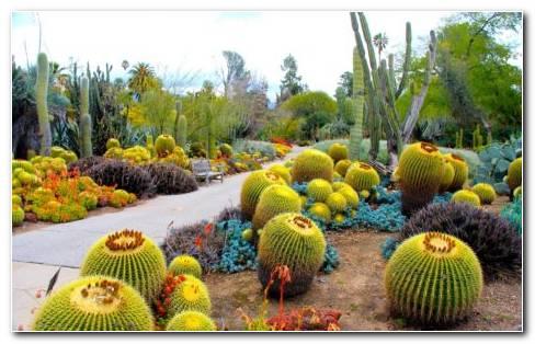 San Marino Cactus Garden