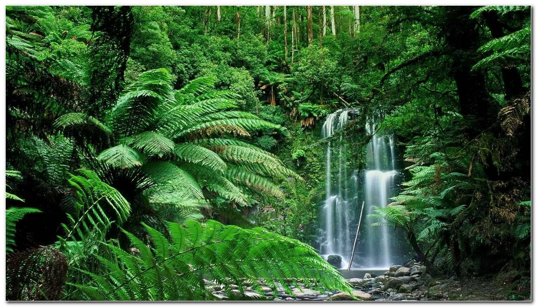 Scenery Green Forest Nature Wallpaper Background Picture