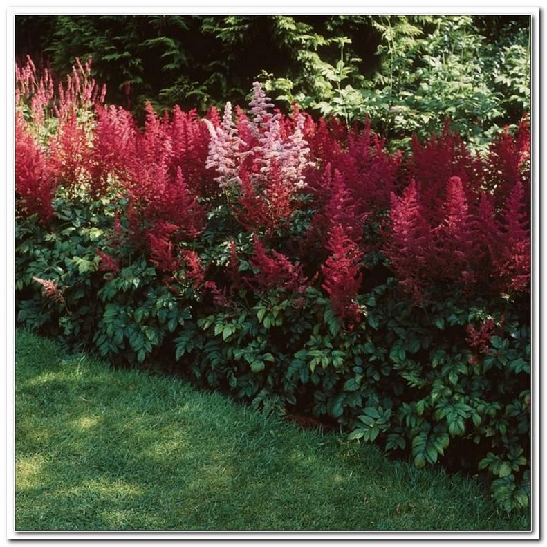 Schattenpflanzen FR Den Garten