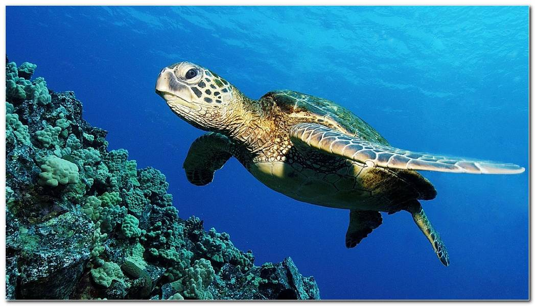 Sea Turtle Backgrounds