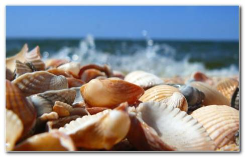 Sea Shells HD Wallpaper