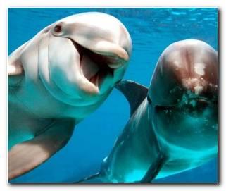 Significado De Sue?os Con Delfines