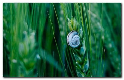 Snail HD wallpaper