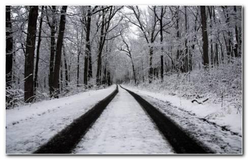 Snowy Tracks HD Wallpaper