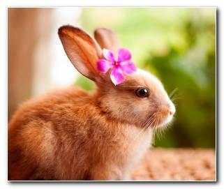 So?ar Con Conejos