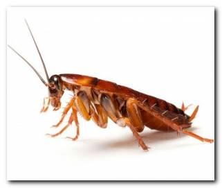So?ar Con Cucarachas Malas Intenciones Hacia Ti