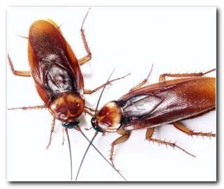 So?ar Con Cucarachas